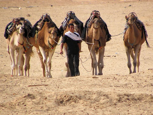 Camels by Keith Roper @ Flickr