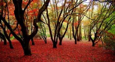 See autumn foliage at England's botanic gardens