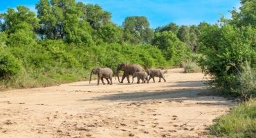 What you should know about South Africa