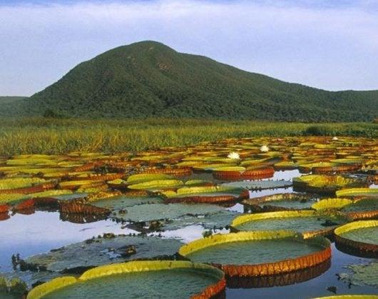 Brazil ecotourism
