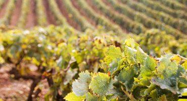 Best Wine Tourism Destinations