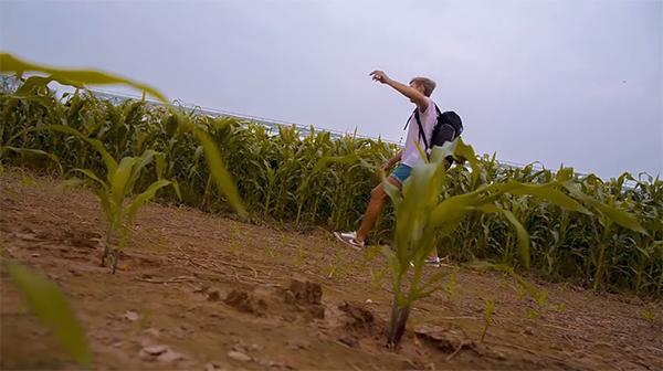 fields-vietnam
