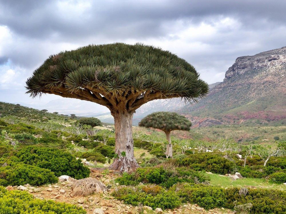 palces to disconnect_socotra