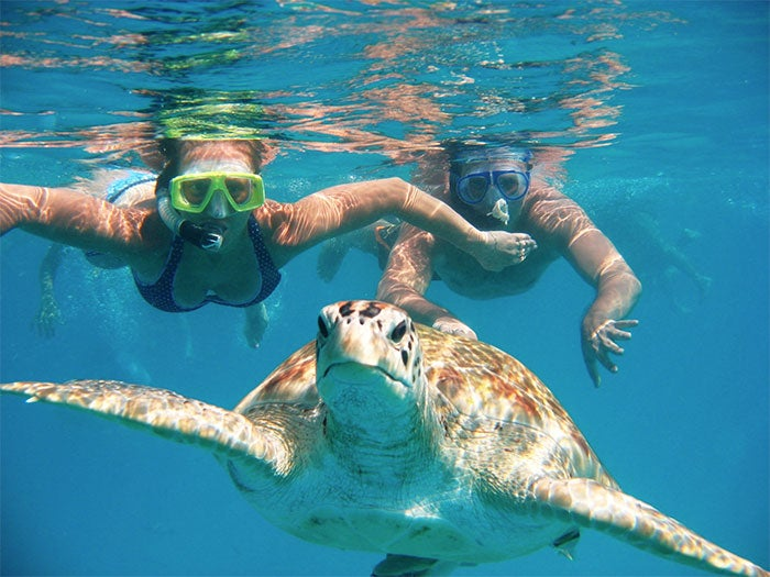 swim-turtles-barbados