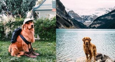 Meet Aspen the Mountain Pup, the Dog that Loves to Travel