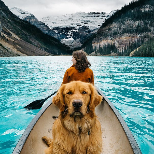 traveling-dog-aspen-the-mountain-pup-instagram-35