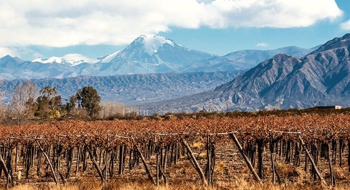 Wine holidays in Mendoza