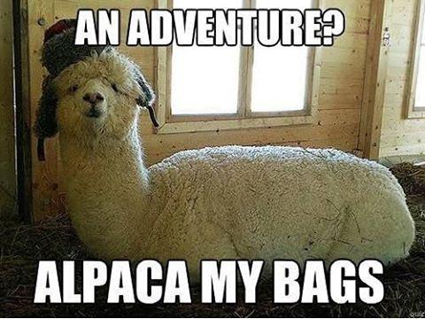alpaca-bags