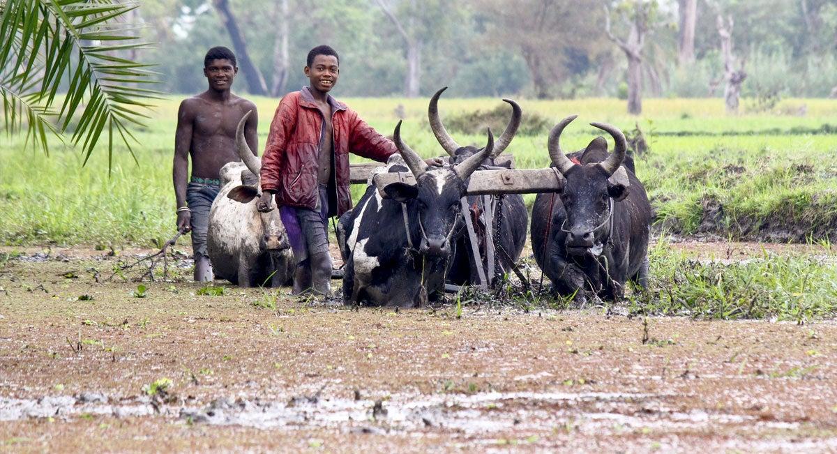Agriculture in Madagascar
