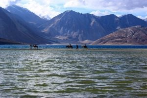 horse crossing a lake in ladakh