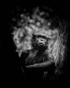 a photo of a monkey at fotografiska stockholm