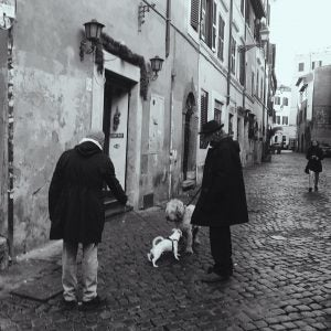 locals walk their dogs in the neighbourhood of trastevere rome