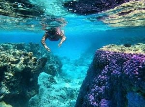 snorkeling in the cook islands