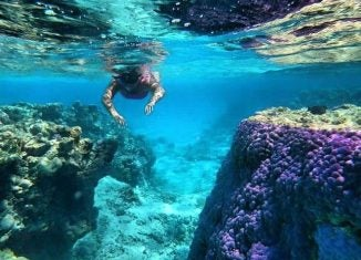 snorkeling in the cook islands