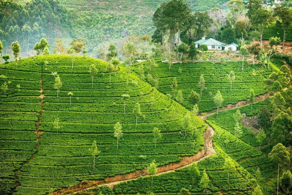 Sri Lanka - Opodo Travel Blog (1)