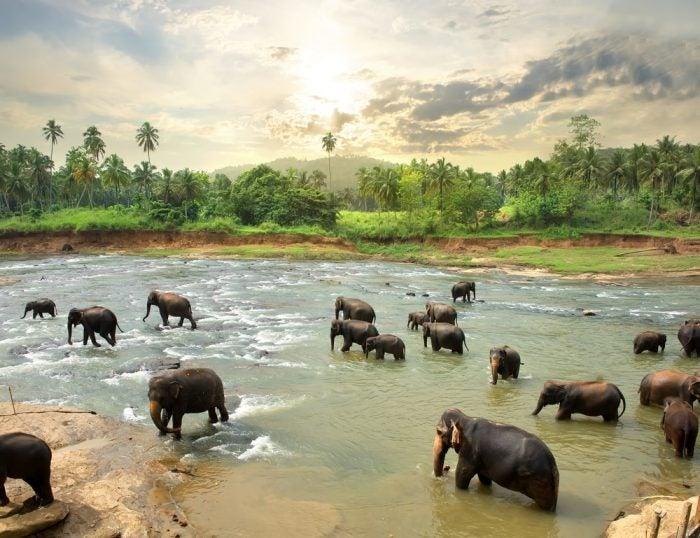 Sri Lanka - Opodo Travel Blog (7)