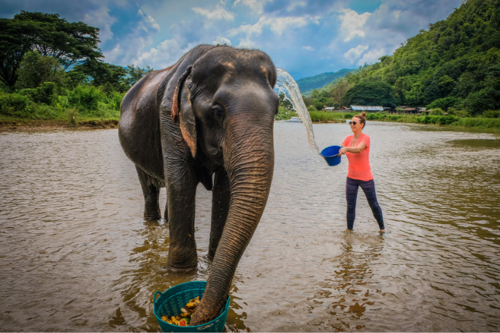 Elephant sanctuary in Thailand