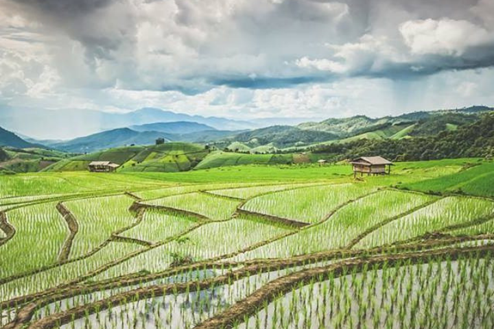 Rice terrace - Thailand - Opodo