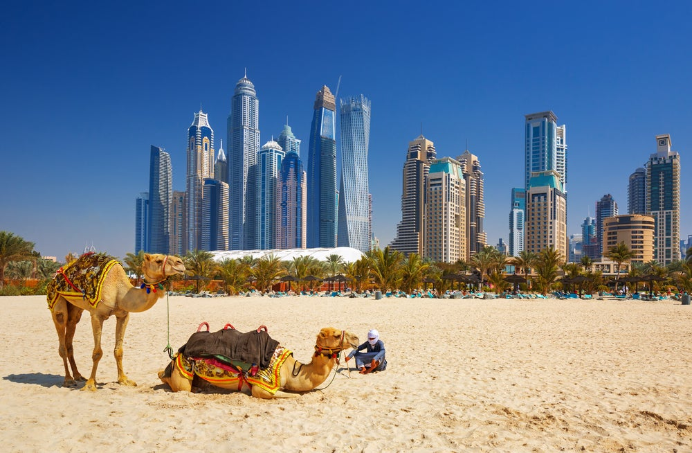 Hot in October: Camel relaxing on the beach in Dubai